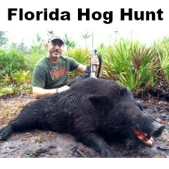 Florida Hog Hunt