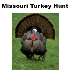 Missouri Turkey Hunt for 2